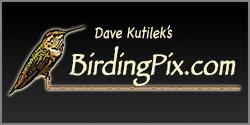 Dave Kutilek's Website